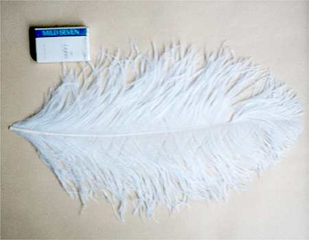 オーストリッチ 40cm (白) この羽根はディスプレイ、アクセサリー、ヘットドレス等に使用されてます。
