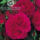 バラ苗/David Austin / デビッド・オースチン/フォールスタッフ (Falstaff) 鉢苗輸入苗 二年生 6リットル鉢植え苗/薔薇/RCP/05P03Sep16/【HLS_DU】
