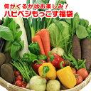 野菜セット 送料無料 気まぐれ野菜増量中! 福袋野菜セット ...