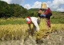 【送料無料】有機肥料・減農薬にこだわった23年産新米新潟県佐渡産コシヒカリ精米or玄米2キロ(1キロ×2袋)お米のおいしい研ぎ方解説付き*北海道・九州は別途送料450円が掛かります