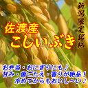 新米【送料無料】28年産新潟県佐渡産こしいぶき玄米30kg炊き上がりのツヤが良く、粘りがあり、コシヒカリに匹敵する食味を持っています。*北海道・九州区域は別途送料500円が掛かります。