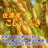 新米【】26年産新潟県佐渡産こしいぶき玄米30キロ炊き上がりのツヤが良く、粘りがあり、コシヒカリに匹敵する食味を持っています。*北海道・九州区域は別途送料500