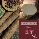 御歳暮 ギフト 長芋 信州 松代特産 熟成長芋1本と新芋2本セット 数量限定贈答用 5kg(3本)