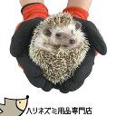 ゆうパケットOK◆ハリネズミ用品専門店◆はりねずみを持っても痛くない!厚手コーティング手袋