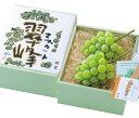 【翠峰】2房(約1.2kg)/種なしぶどう/お中元/贈り物/ギフト