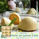 ほんきのレモンケーキ-6個入