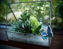 【風色】ハンドメイド ステンドグラス テラリウム 「蝶」【ネコポス対応】