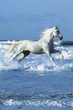 『ホワイトホース』ポスター PH-0227