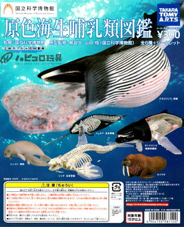 Takaratomy Arts solid capsule Encyclopedia primary marine mammal guide secret all 7 pieces