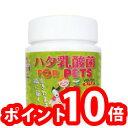 【クーポン獲得】【ポイント10倍】【送料無料】【プレゼント付】ハタ乳酸菌 FOR PET(60g入り 約2ヶ月分 計量スプーン付)