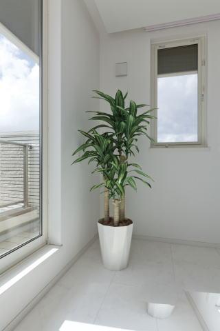 【最大500円クーポン】【送料無料】幸福の木1.6m 400A300-29
