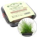 ベビーチモシーファーム/生牧草 育てる 新鮮おやつ 栽培セット