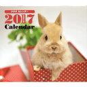 2017 ミニカレンダー ウサギ/うさぎ ロップイヤー ネザー 平成29年 酉年 壁掛け 2017年