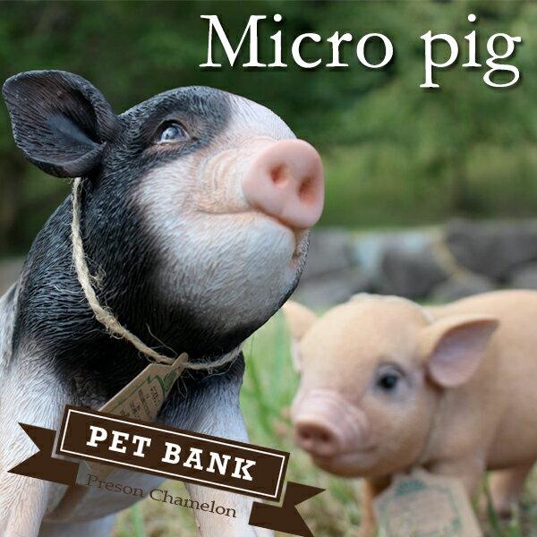 貯金箱 ペットバンク Micro pig ブタ 全2種
