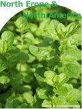 「北ヨーロッパと北アメリカのハーブ12種セット」ハーブ苗おまかせ12種セット  9vp×12ポット Herbs of the North Erope & North America