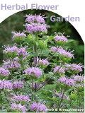 「観賞用のハーブ苗12種セット」ハーブ苗おまかせ12種セット  9vp×12ポット Herbal Flower Garden