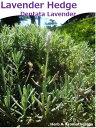 ショッピング苗 香りの生垣♪デンタータラヴェンダー(フリンジラヴェンダー・フリンジドラヴェンダー・フレンチラヴェンダー・トップドラヴェンダー)  ハーブ苗12ポット Dentata Lavender