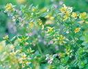 地中海と南ヨーロッパ・ハーブ苗おまかせ12種セット