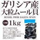 「魚介の宝庫」スペイン『ガリシア産』大粒ムール貝【約1kg】【冷凍のみ】【ボイル済み】【D+1】