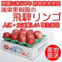 飛騨リンゴ【H30年度 ご好評につき2週...