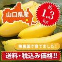 【ひかりバナナ】1.3kg 国産バナナ バナナ 国産 ひかりバナナ もんげーバナナ 無農薬 フルーツ