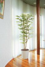 ギフト 造花 人工観葉植物 光触媒 光の楽園