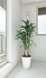 造花 人工観葉植物 光触媒 光の楽園 御祝