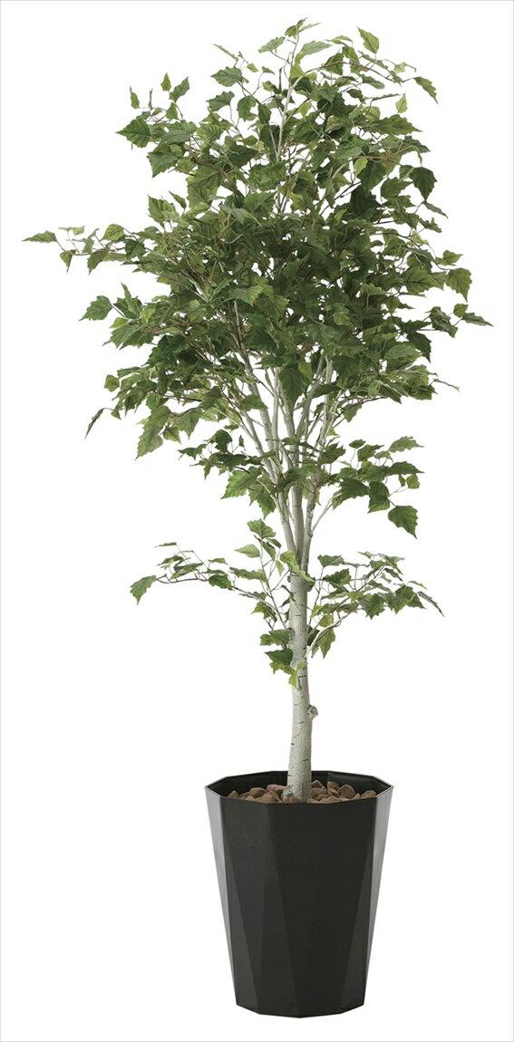 光触媒 光の楽園 白樺1.9m【インテリアグリーン 人工観葉植物】