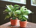 【送料無料】光触媒 光の楽園 カントリーグリーン2個セット<ゼブラ・ポトス>【アートフラワー 造花 人工観葉植物 人工植物】