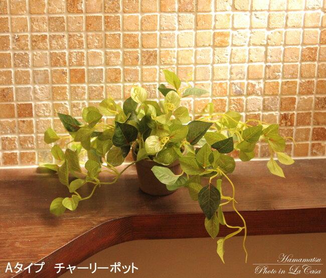 光触媒 観葉植物 光の楽園 チャーリーポット...:hikarinorakuen:10006414