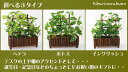 Three types of paradise mini-green Wood [interior houseplant person mechanic houseplant] available of the photocatalyst light [comfortable ギフ _ expands an address]