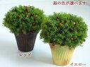光触媒 観葉植物 光の楽園 ベリーポット <イエロー/レッド>【アートフラワー 造花 人工観葉植物 観葉植物】