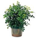 光触媒 光の楽園 クリアプランター10【完売しました】【インテリアグリーン 人工観葉植物 人工植物】【RCP】