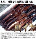 イカ 生イカ 活イカ スルメイカ いかさし 下氷 鮮度保持 真イカ イカ刺し 函館魚市場