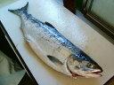 サケ 秋鮭 生鮭 オス さけ 北海道産 1本-4kg前後「送料無料」