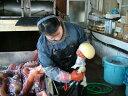 タコの卵 たこの卵 冷凍ミズタコ生卵 たこまんま 北海道産2kg 【送料無料】