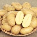 (種芋)ジャガイモ「ピルカ」1kg 【02P03Sep16】