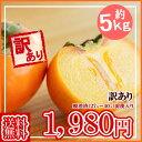 【送料無料】山形産 庄内柿(しょうないがき) 訳あり約5キロ 送料無料★11月上旬頃から順次発送予定 05P03Sep16