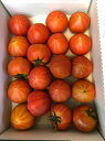 フルーツトマトぐんま産糖度11度以上ブリ