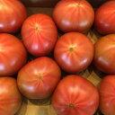 高糖度トマトアメーラトマト