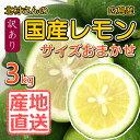 【広島 産地直送 北村農園 国産 レモン】北村さんのレモン3kg【サイズ混合】