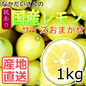 【産地直送】広島 大長産 レモ...