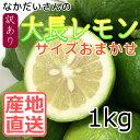 【広島産 大崎下島 国産 レモン】なかだい農園の 大長レモン 1kg