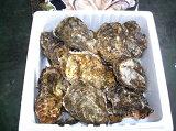 広島 牡蠣【広島県玖波産 かき】【アミスイ】殻付き牡蠣20個