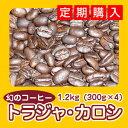 幻のコーヒー「トラジャ・カロシ」たっぷり1.2kg(約120杯分)送料無料!