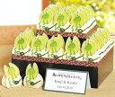 ウエルカムボードになる福カエル(こんぺいとう)ウエディングのプチギフト30個セット