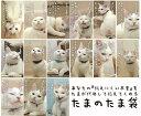 超かわいい!!たまのたま袋★ポチ袋/お年玉袋 5枚入り 祝儀袋 ねこ ネコ 猫 cat