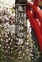 亀戸天神の藤 江戸の薫り漂う / 日本樹木保護協会 【単行本】