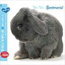 Rakuten - ゆるクラ うるうる センチメンタル 【CD】