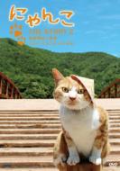 にゃんこTHE STORY 2 宿場町ねこ散歩 奈良井宿・福島宿編 【DVD】
